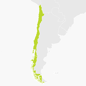 Hire a sat nav for Chile